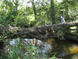 The fallen tree over the river by beachtownkid