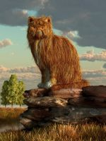 Shaggy Cat by deskridge