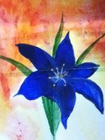 Blue Lily by sPhEyTgEuRy
