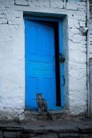 Lonely Cat by fougasse