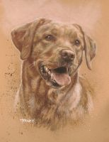 Dog Portrait - Labrador 'Luna' by ownlifeworks