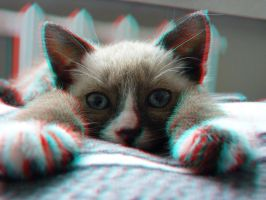 Lazy Cat 3-D conversion by MVRamsey