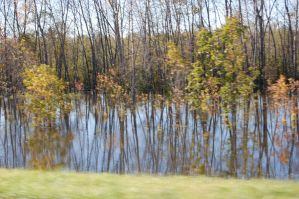 Trees in the Flood Waters from the Back Of a Truck by Davring