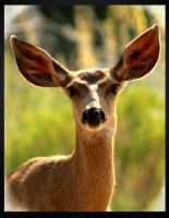 Lovely Deer by I-Heart-Photos