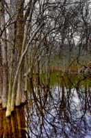 Trees and Water by lightzone
