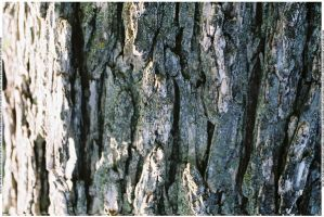 Bark Texture 5 by webgoddess