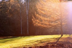 sunnyautumn by janda