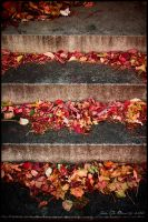 The Steps Of Autumn by kkart