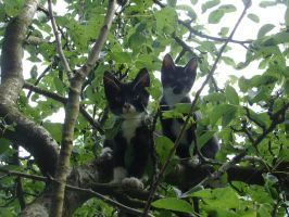 Cats grows on trees 2 by Westerfarmer