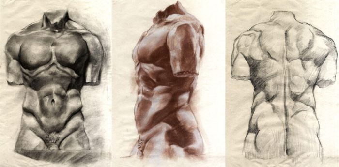 Male torso bust studies by Aberzheim
