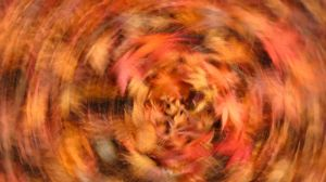 Autumn Abstract 07 by theblindalley