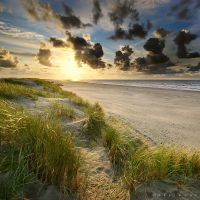 Summer Groove by Oer-Wout