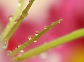 Lilly drops by Katja-Spectraliquid