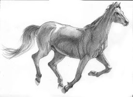 horse sketch by Boriseous