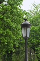 Lonely Lamp by Smaragd01