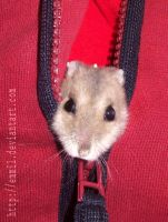 Hamster zipper by emmil