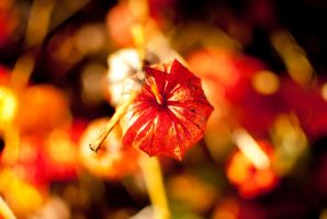 Fireworks of autum 10 by macgl