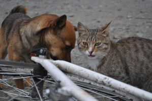 A cat, a dog and my bicycle by DoireannFriz