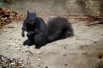 Black Squirrel by WorldsInWorld