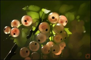 pink currants by GaudiBuendia