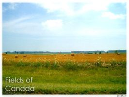Canadian Fields by I-Am-Canadian-Eh