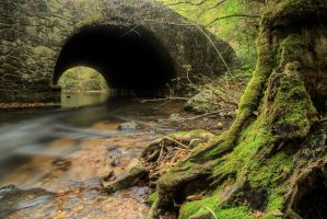 Stump-bridge-hdr by joelht74