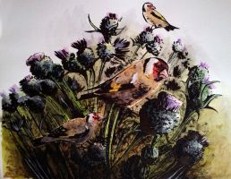 Goldfinches in thistles by BecciES
