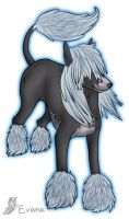 IBC - Chinese Crested by tailfeather