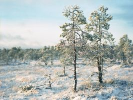 Winter in the bog by JakezDaniel
