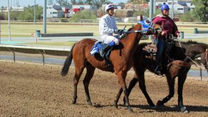 Racehorse Stock 33 by Rejects-Stock