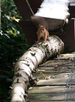 Squirrel on log by piglet365