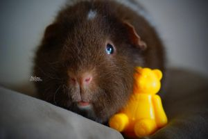 Guinea pig2 by nelow-ow