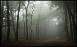 Venturing into the mist by jchanders