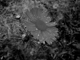Drops by EllyMello