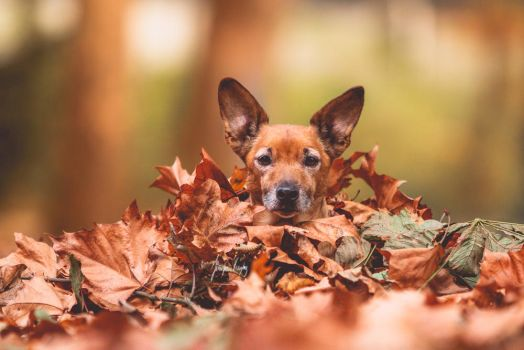 Leaf dog by Hadissima