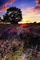 Dunwich Heath 1c. by Wayne4585