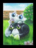 Serious cat was having a nap ACEO by KingZoidLord