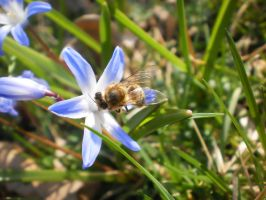 A Bee 2 by tinuvielluthien