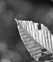 Leaf by wagn18