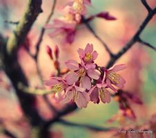 Just a Memory of Spring II by MyLifeThroughTheLens