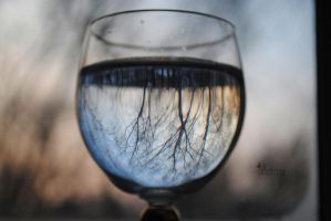 Trees in the glass. by Akatamy