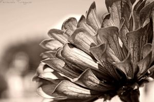 vintage flower by fernandaturegano