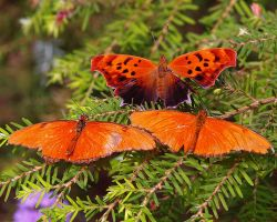 Woodland Butterfly 6 by swashbuckler