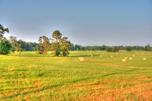 Pasture HDR Three by Dramier