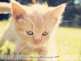 Ginger! by LLJPhotography