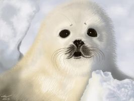 White Seal Pup by niveky