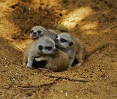 Tiny Little Bundles. by quaddie