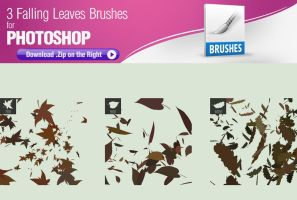 3 Falling Leaves Brushes by pixelstains