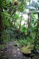 Rocky Jungle Path by CompassLogicStock