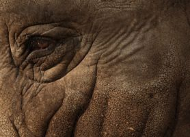 Elephant by The-Underwriter
